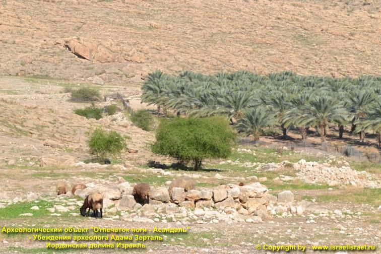 Экскурсии в Иорданскую долину