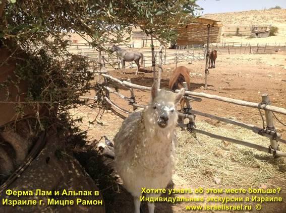 Ферма лам Альпака на карте