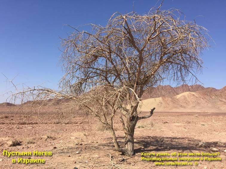 Пустыня Негев Эйлат