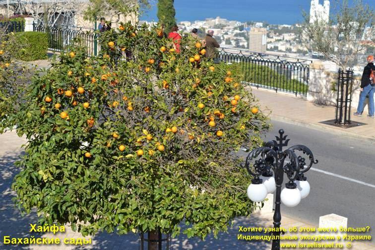 Бахаи на израильской земле Всемирный дом бахайские сады