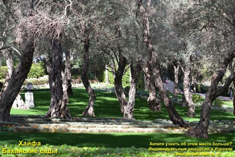 Панорама Бахайские сады Хайфа
