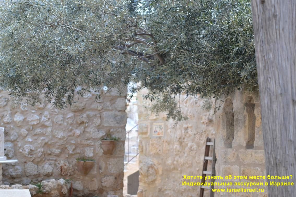 How to find the miraculous tree of Jerusalem