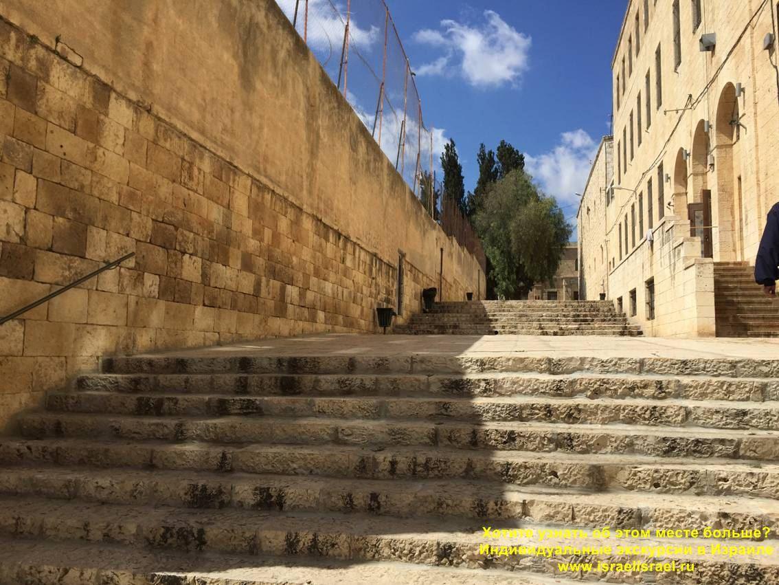 Как найти чудотворное дерево Иерусалиме