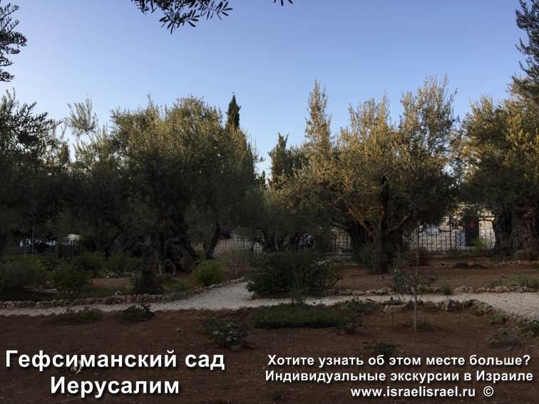 гефсиманский сад пастернак