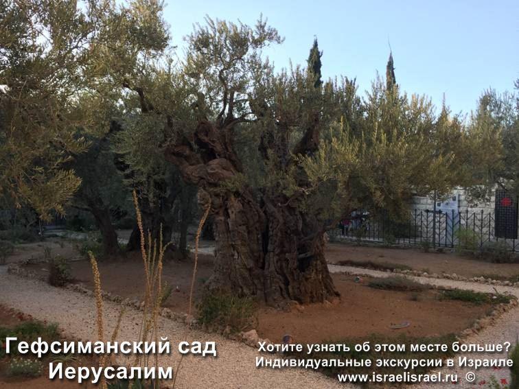 гефсиманский сад картина