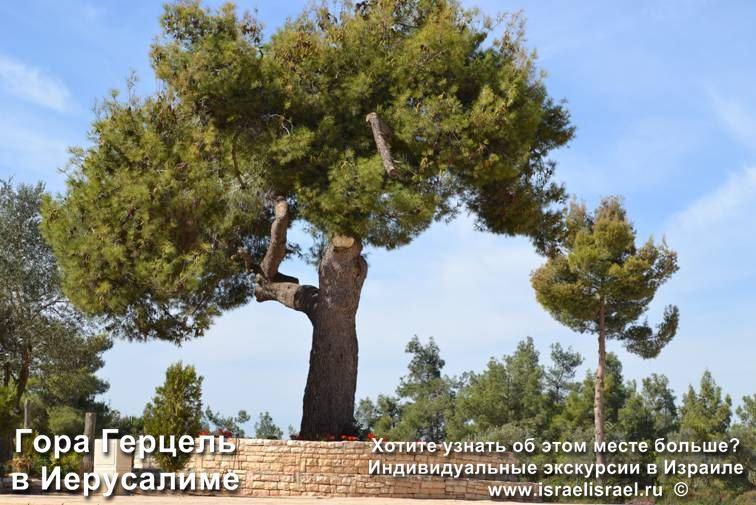 jerusalem mount hertzel cemetery