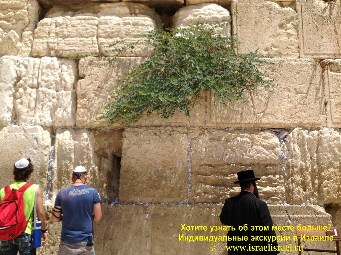 стена плача израиль