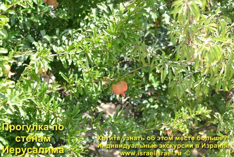 wall of Jerusalem web camera