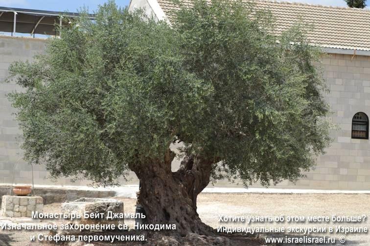 Бейт Джамаль эксклюзивные экскурсии по Израилю