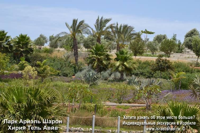 парки израиля фото Ариель Шарон
