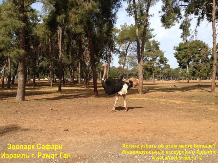 Сафари в Израиле с персональным гидом