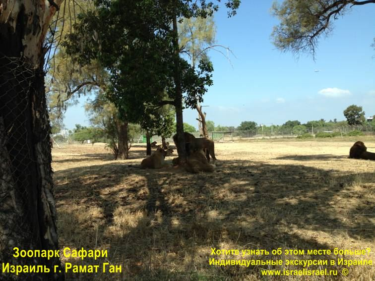 слоны в израиле сафари рамат ган