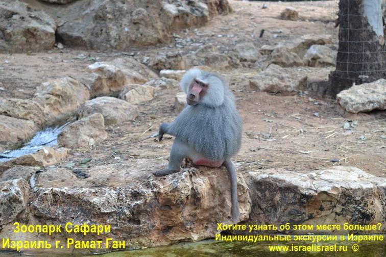 какие животные в сафари Израиля