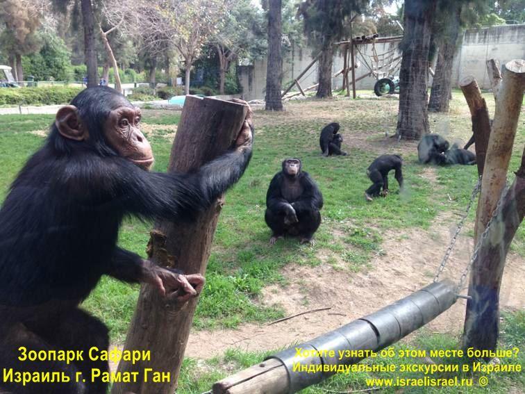 Зоопарк Сафари в Израиле