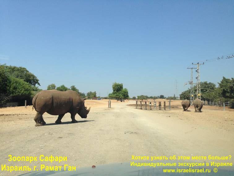 Зоопарк Сафари Рамат-Ган