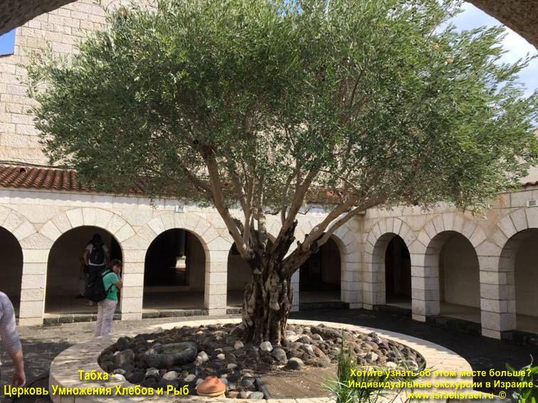 Церковь Умножения Хлебов и Рыб, Святая Земля и православное паломничество