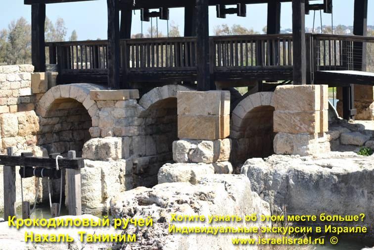 Нахаль таниним крокодилы в Израиле