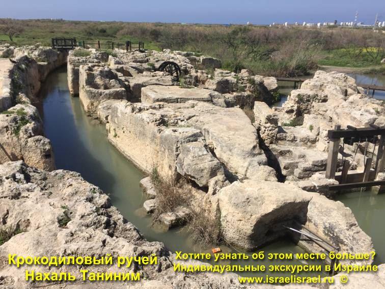 крокодилы в Израиле