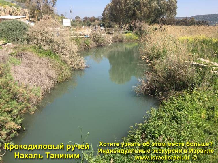 крокодилы таниним в Израиле