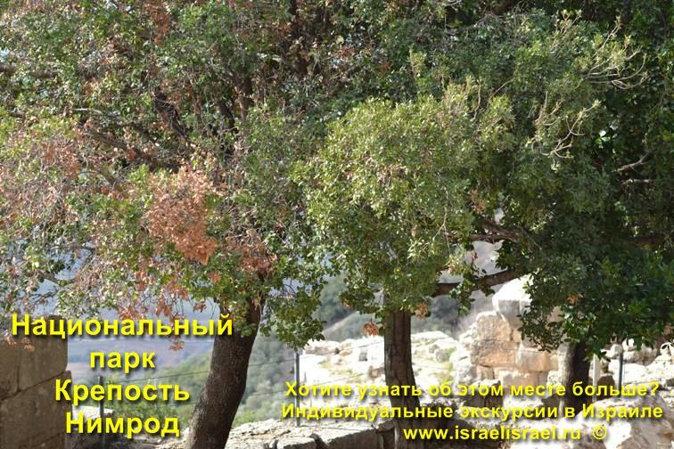 Нимрод Израиль Галилея