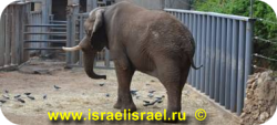 Сафари, индивидуальная поездка в зоологический центр,