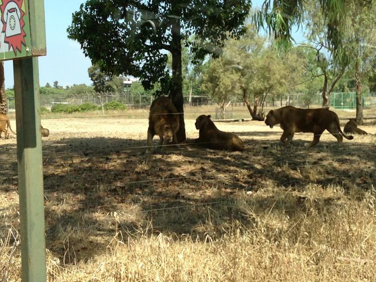 Экскурсии по Сафари в израиле
