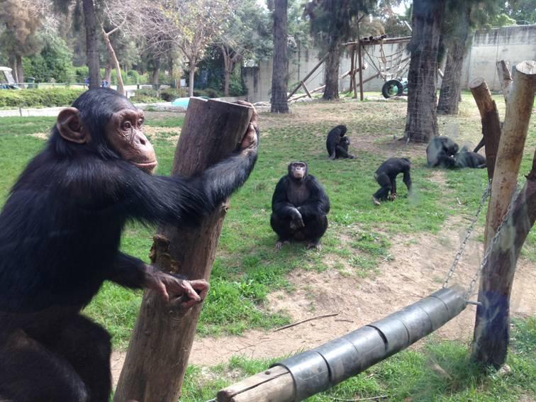 Индивидуальная поездка в зоологический центр Сафари