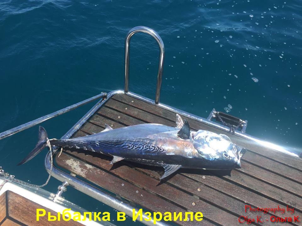 рыбалка на средиземном море Турция