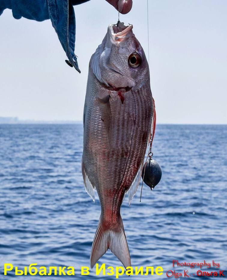 рыбалка в Израиле видео