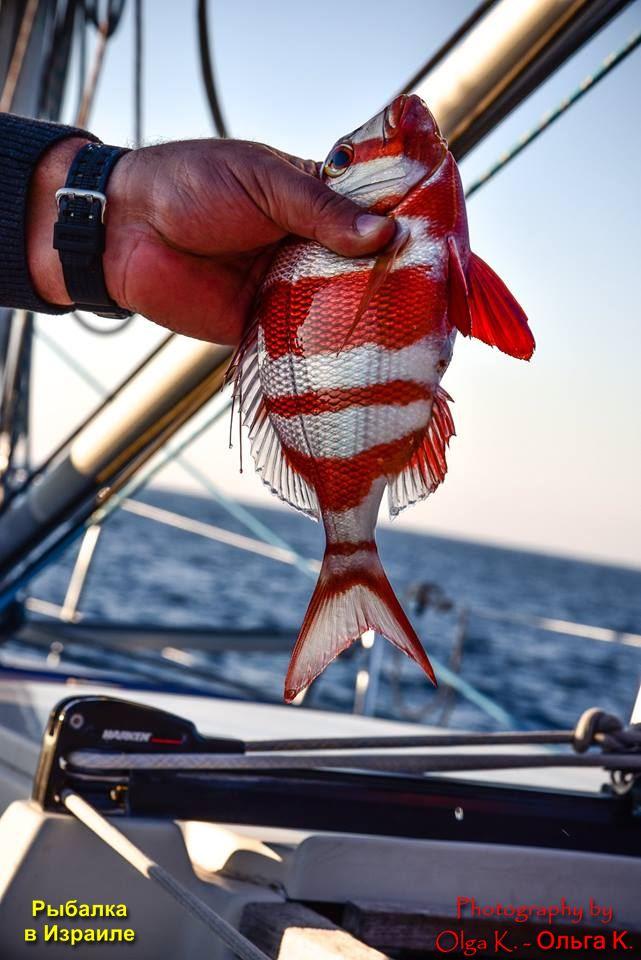 рыбалка в Израиле на карпа