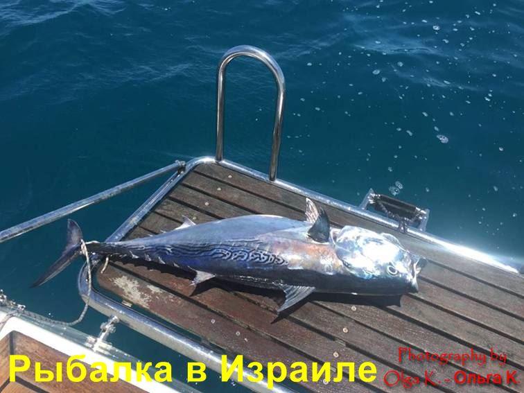рыбалка в Израиле платная