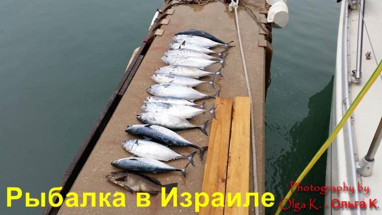 рыбалка в Израиле на море