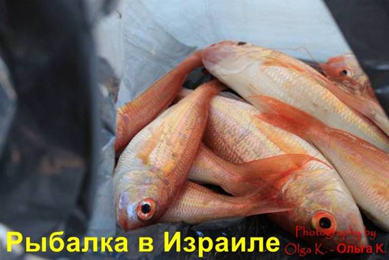 Заказть рыбалку в Израиле