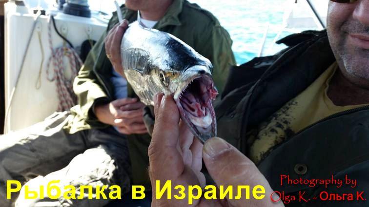 платная рыбалка на юге Израиля